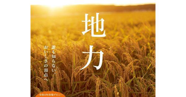 秋田米の新品種がネーミング案を募集