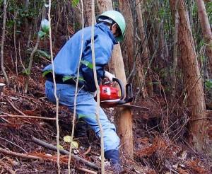 「こうち森林救援隊」